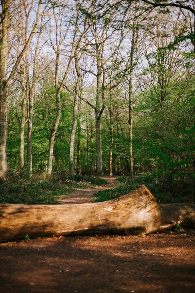 photo grossesse forêt
